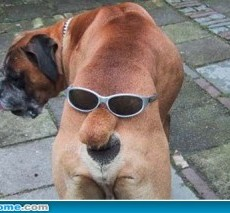 funny-dog-picture-ass-300x213