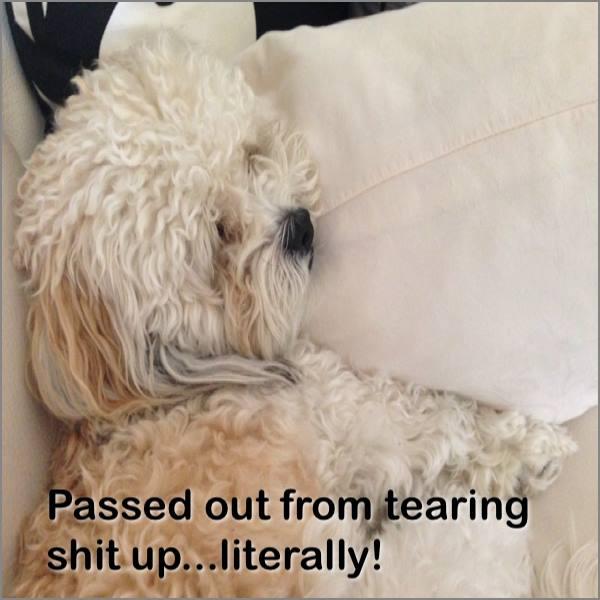 Teddy Brewski -cutest dog