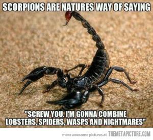 Scorpions suck