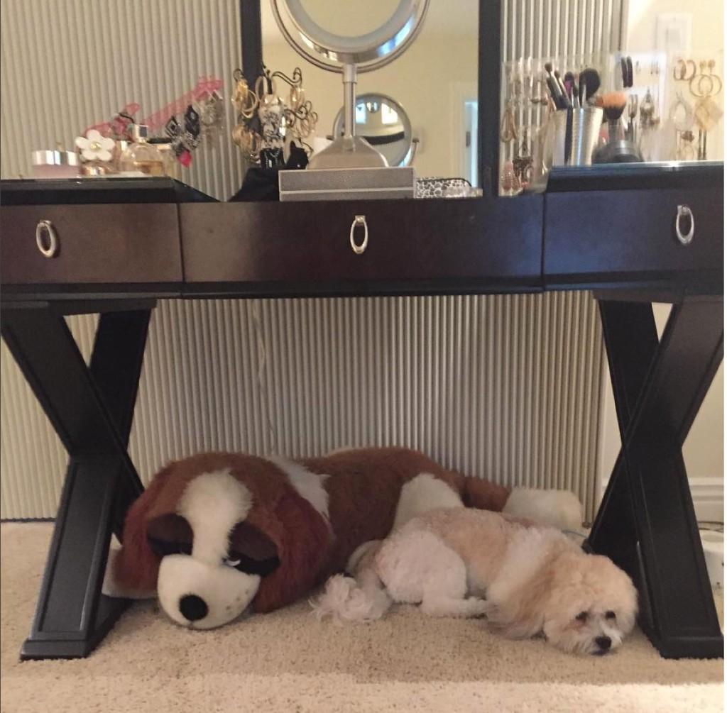 Teddy brewski needs a cuddle clone!