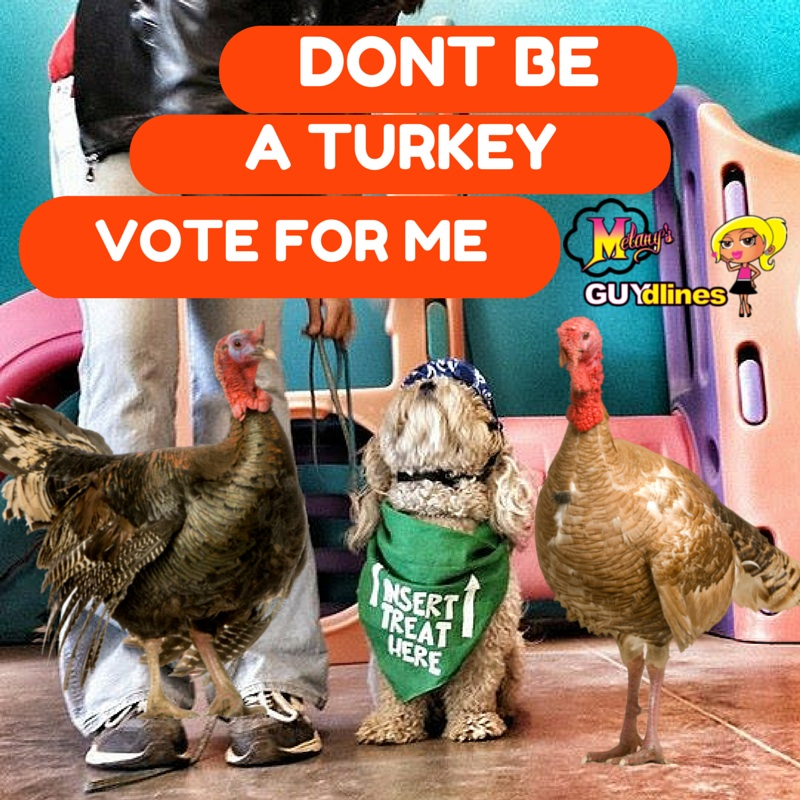 Dont be a turkey - vote for me!
