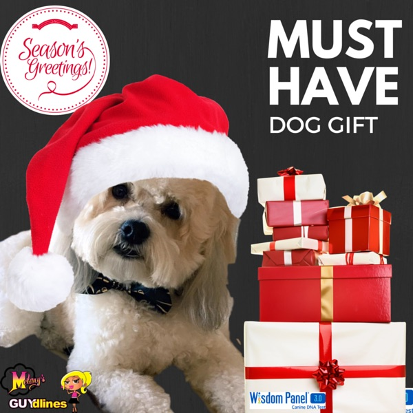 Must Have Gift For Your Dog: Wisdom Panel® 3.0 DNA Test