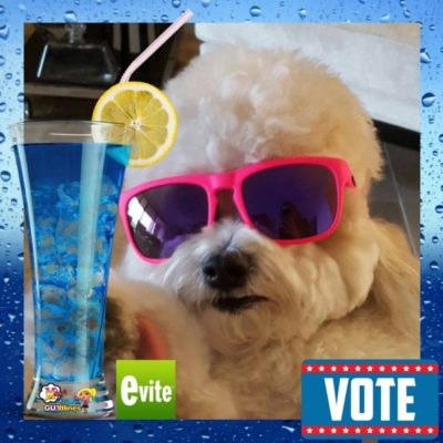 Vote For Teddy Brewski In The Evite #PawtyPeople Contest