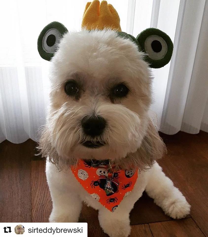 Sir Teddy Brewski dressed up for Halloween!